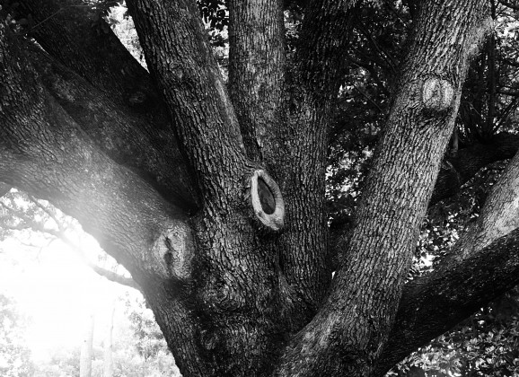 Fingers in the Trees