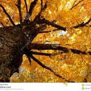Rhythm of the Leaves